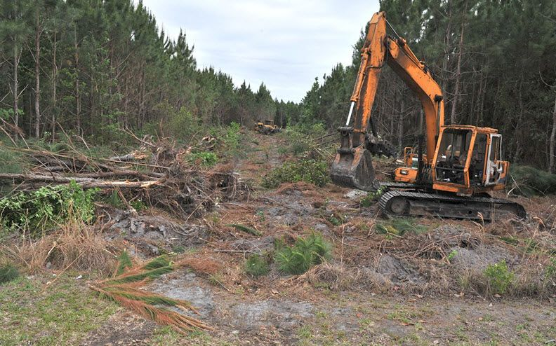 tree clearing